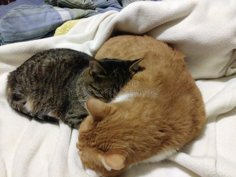 2 cat sleeping on the bed stock photos