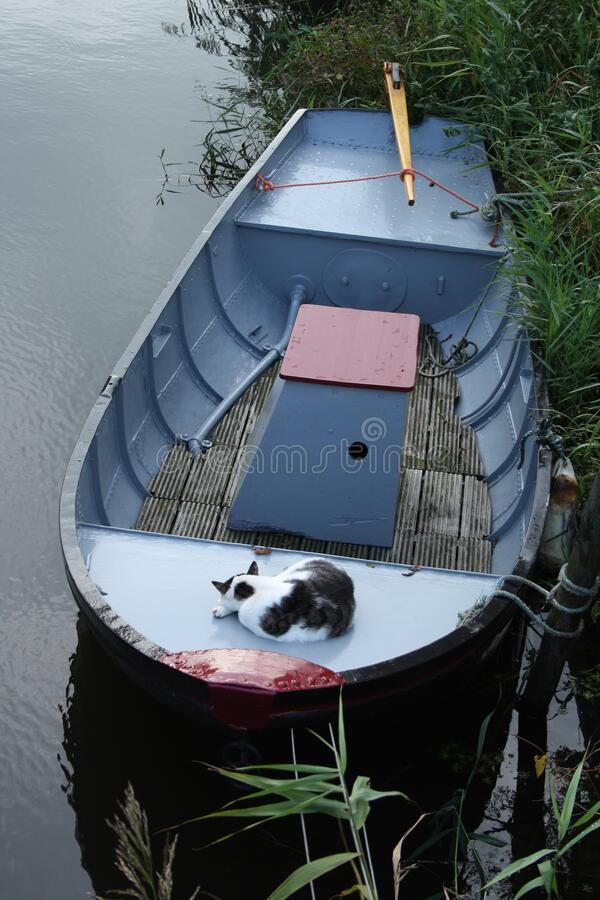 Cat sleeping in boat royalty free stock image