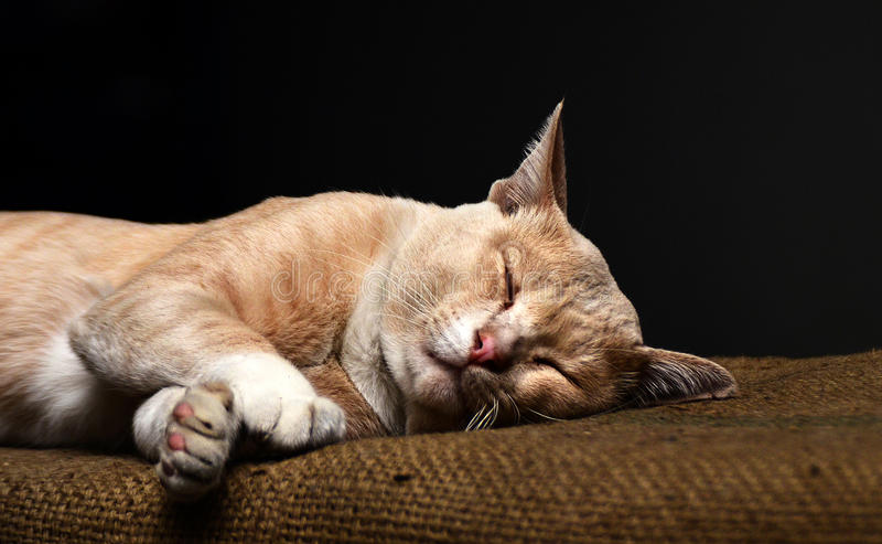 Cat Sleeping. Cats like to sleep, it's nice to have people enjoy it as a pet royalty free stock images