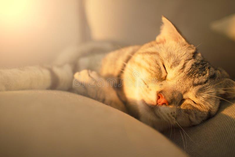 Cat Sleeping On The Couch royalty-vrije stock afbeeldingen