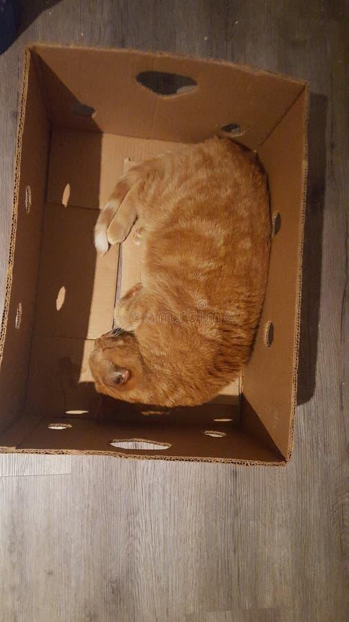 Cat Sleeping en una caja imagen de archivo
