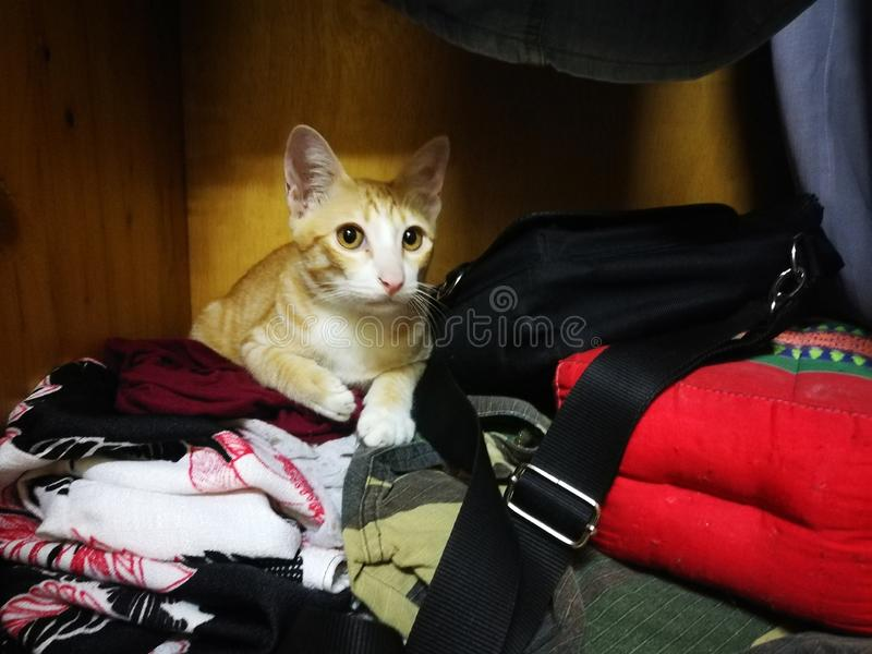 A cat sleeping in a fabric closet royalty free stock photo