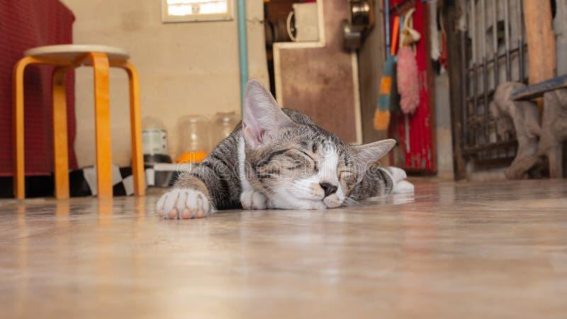 Cute little cat sleeping. The gray little cat sleeps happily alone on the floor stock photos