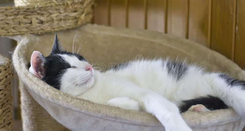 the cat is sleeping in his lying pillow royalty free stock photo