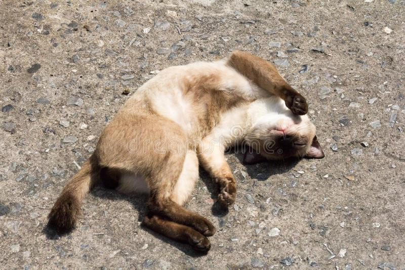 Cat sleeping in the hot sun.  royalty free stock photo