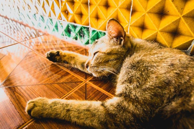 Cat Sleeping no templo foto de stock