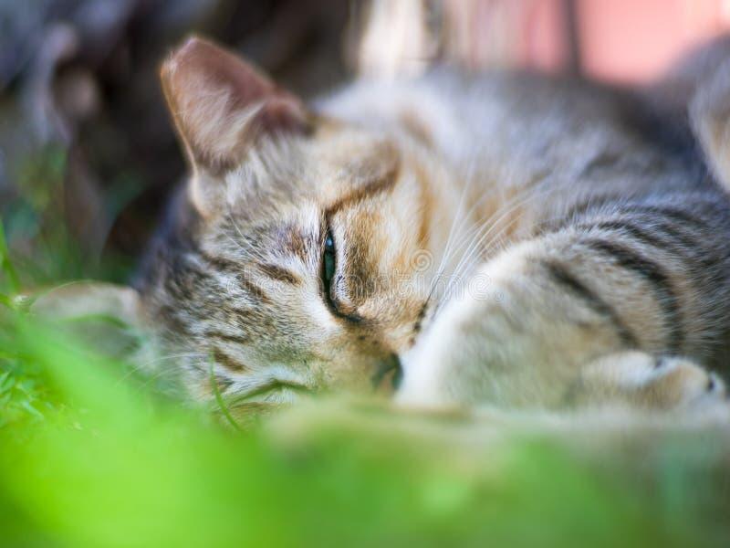 Cat Sleeping Oído-inclinada imagenes de archivo