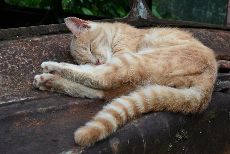 Lazy and cute cat royalty free stock photos