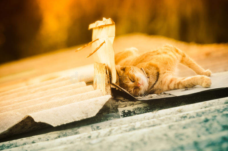 Cat sleeping on outbuilding roof stock image