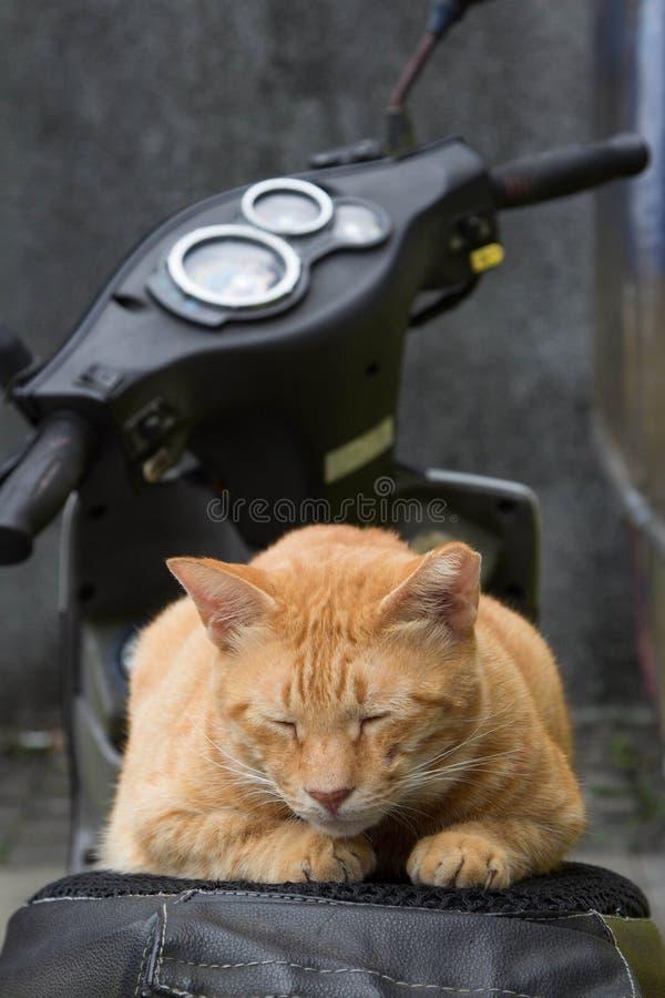Cat Sleeping på motorcykeln arkivbilder