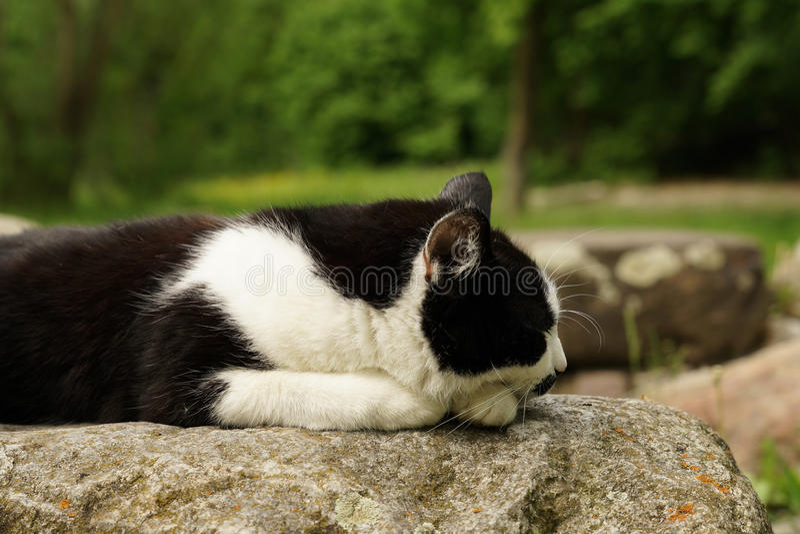 Cat sleeping on a rock stock image