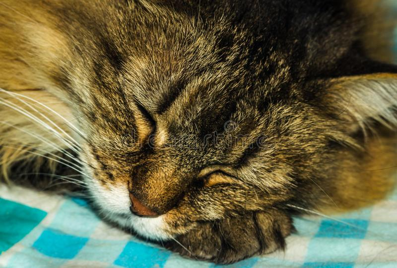 The cat is sleeping stock photography
