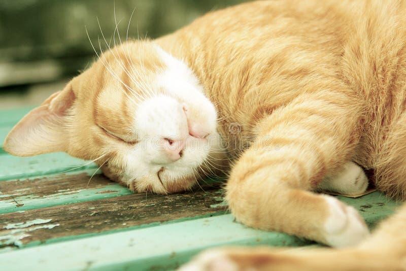 Cat Sleeping Soundly på en offentlig bänk arkivfoto