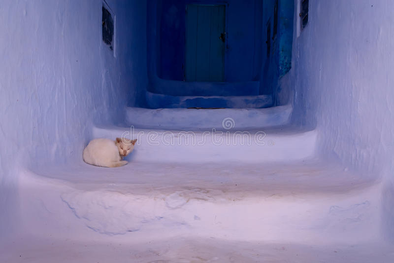 Cat sleeping on stairs in Chefchaouen. A white cat is sleeping on the stairs in front of a home in the Blue City of Chefchaouen, Morocco royalty free stock image