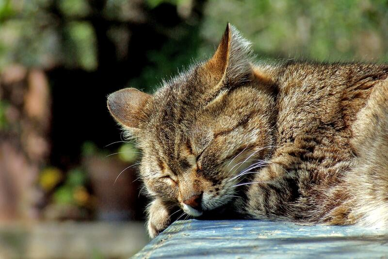 Cat sleeping in sun stock image