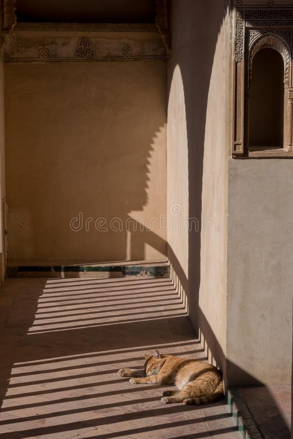 Cat sleeping in the sun. From a typical albaicin balcony in Granada stock photos