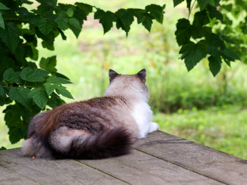 Cat sleeping on a table outdoors stock photo