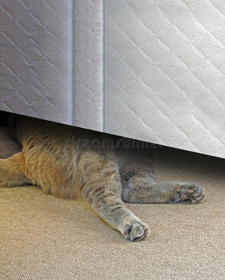 Cat sleeping under bed royalty free stock photo