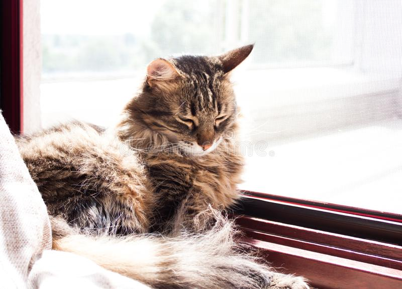 Cat sleeping under morning sun stock photo