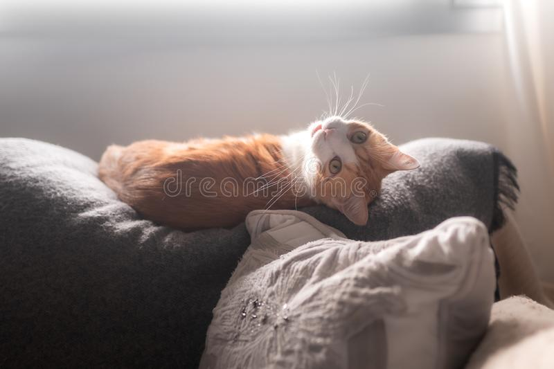 Cat sleeping under the window wakes up and looks back stock photo
