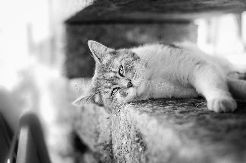 Cat Sleeping In Between The Wall Free Public Domain Cc0 Image