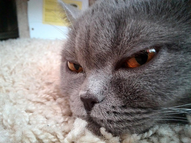 A cat sleeps on a carpet. A cat the sleeps on a carpet stock image