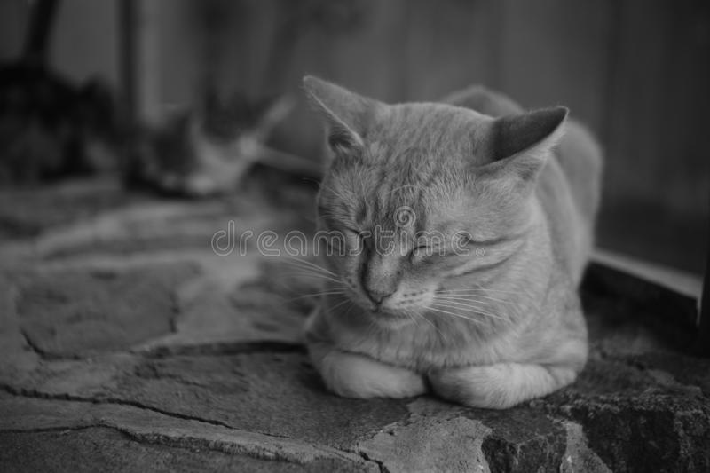 Cat sleeps on the stone floor outdoor, black and white photo.  stock images