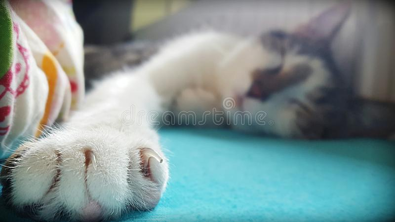 cat is sleepy royalty free stock images