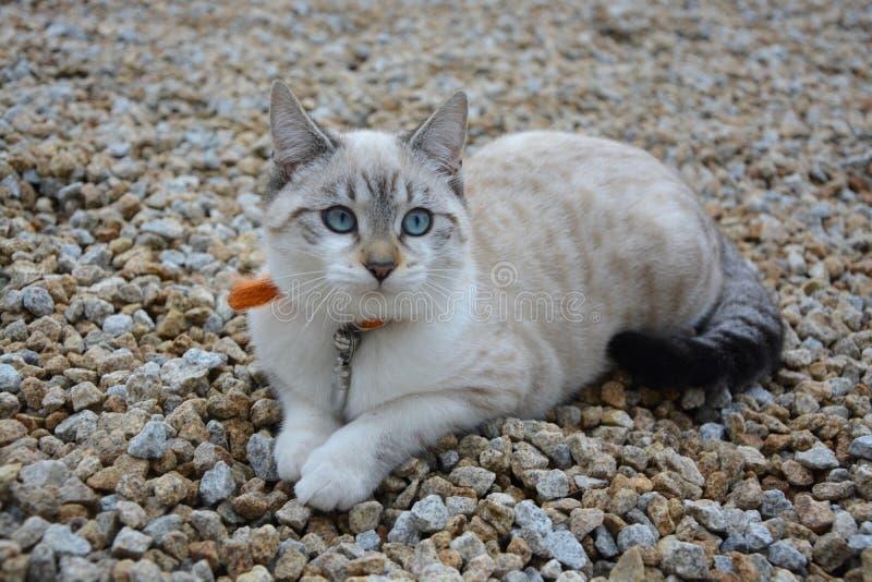 Cat, Small To Medium Sized Cats, Cat Like Mammal, Fauna Free Public Domain Cc0 Image