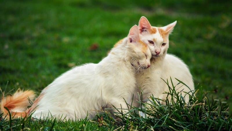 Cat, Small To Medium Sized Cats, Fauna, Grass stock photography