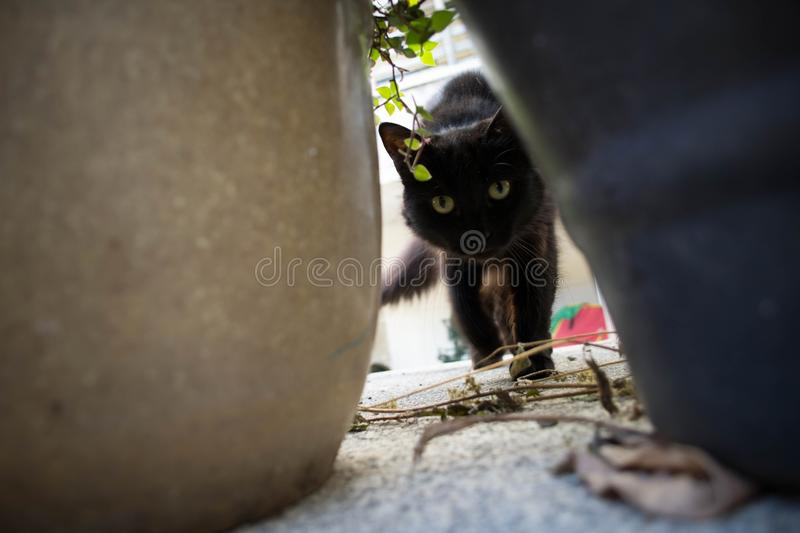 Cat, Small To Medium Sized Cats, Cat Like Mammal, Black Cat stock photos