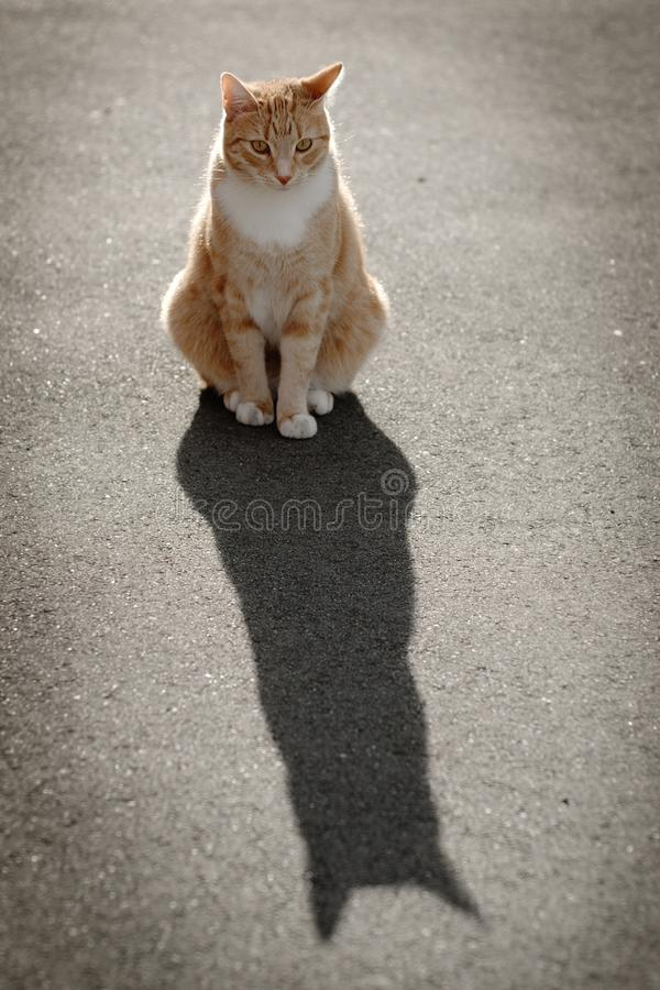 Cat, Small To Medium Sized Cats, Cat Like Mammal, Whiskers stock photography