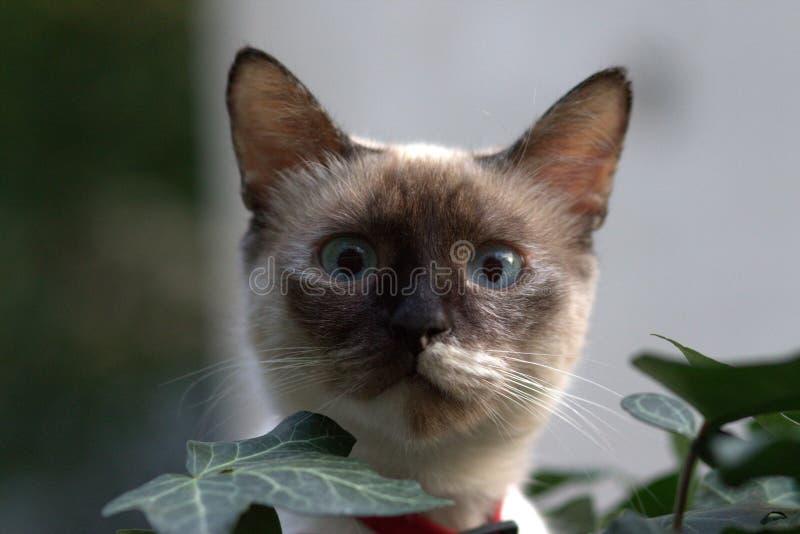 Cat, Small To Medium Sized Cats, Whiskers, Cat Like Mammal Free Public Domain Cc0 Image