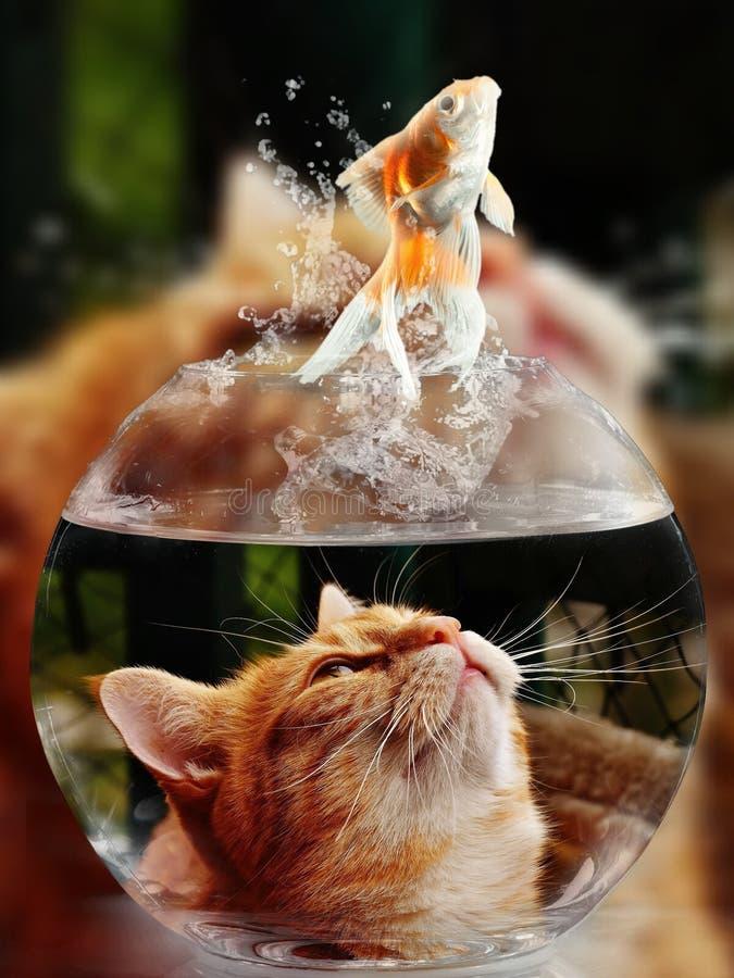 Cat, Small To Medium Sized Cats, Whiskers, Cat Like Mammal royalty free stock photos