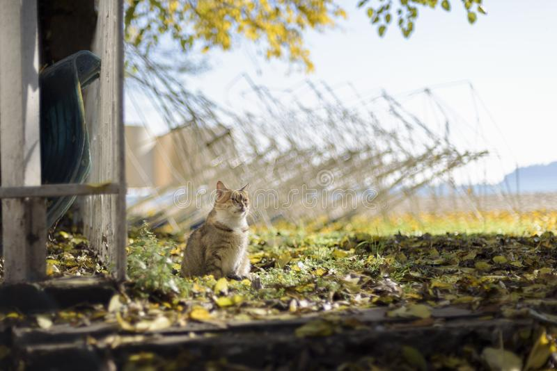 Cat smelling the air. Brown cat in a field taking the sun stock image