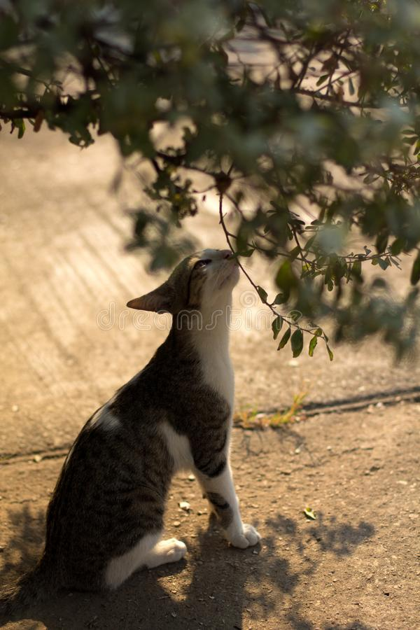 Cat smelling flower and leaf or tree in the morning with light and shadow stock images