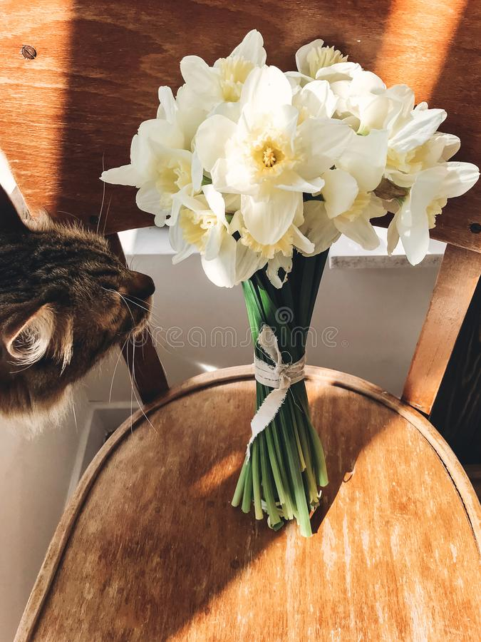 Cat smelling stylish daffodils on rustic wooden chair in sunny light. Fresh yellow flowers bouquet on chair, countryside still royalty free stock images
