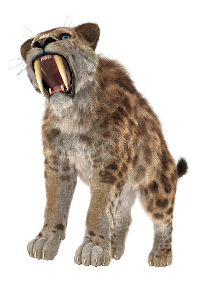 Cat Smilodon grande imagens de stock royalty free