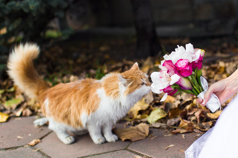 Download Cat sniffing flowers stock photo. Image of autumn, roses - 28726604