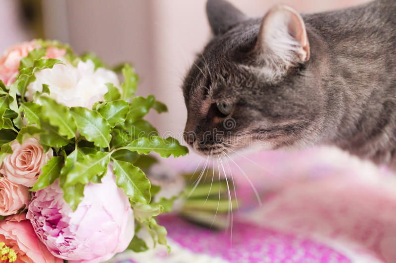 Cat sniffing flowers stock photo. Image of sweet, whiskers - 31742650