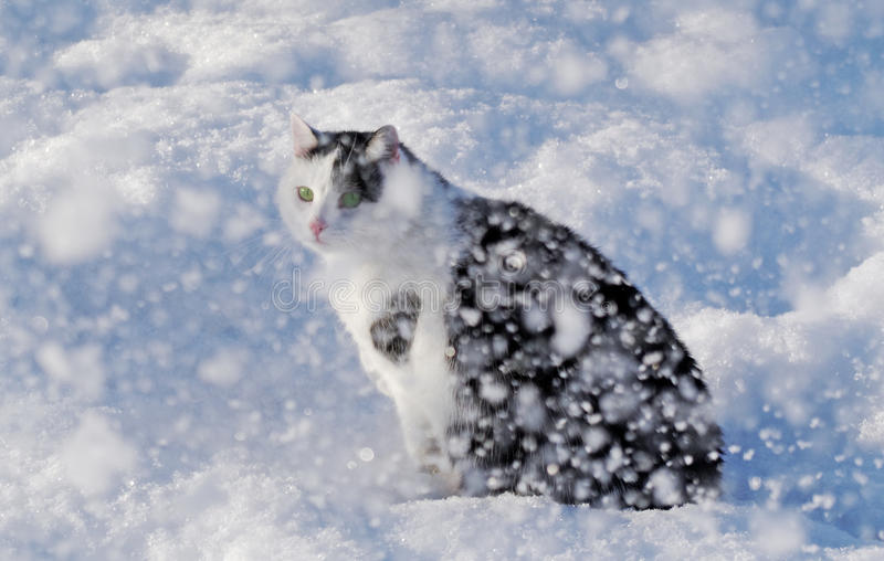 Download Cat and a snow. stock image. Image of light, brightly - 17372565