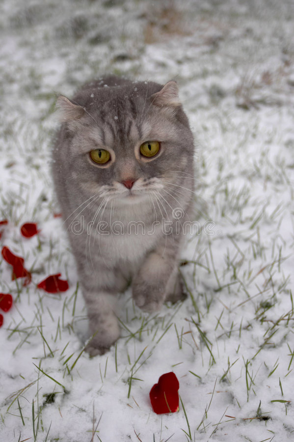 Cat in snow stock image