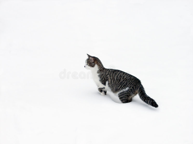 Download Cat In Snow Stock Photos - Image: 508413