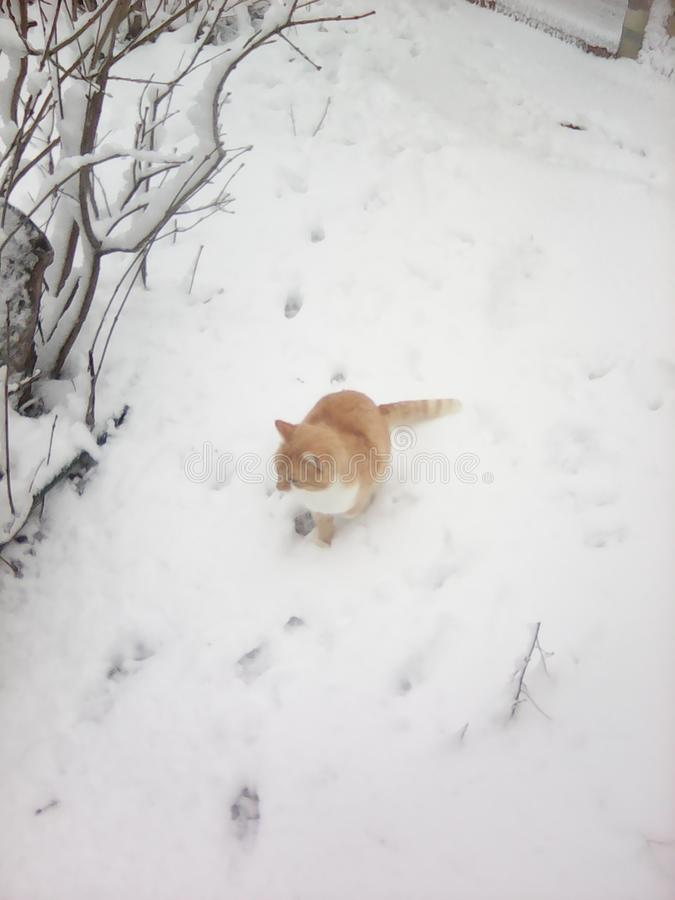 Cat on snow royalty free stock photo