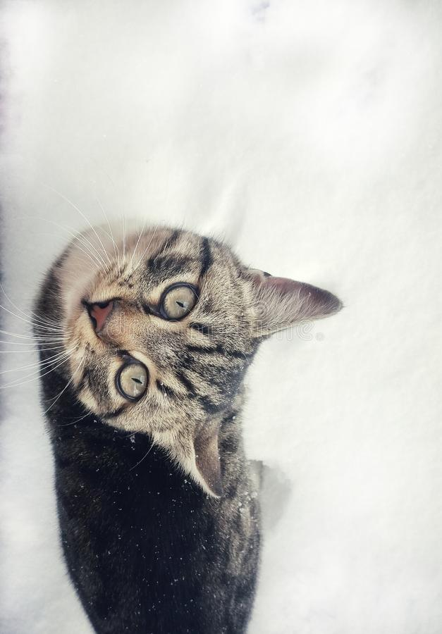 Cat on the snow stock photography