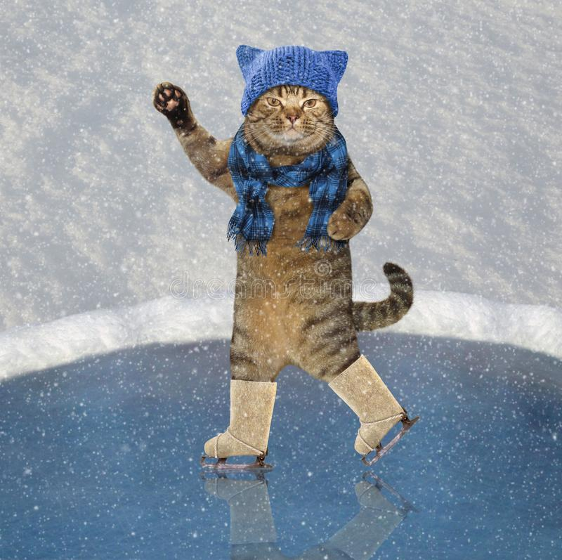Cat and snow royalty free stock photos