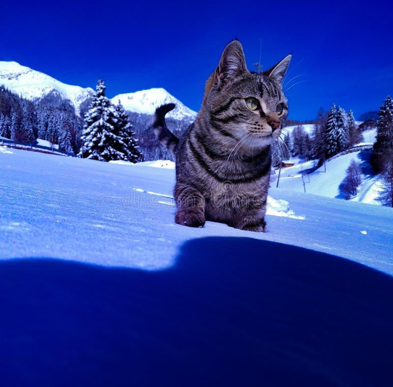 Cat in snow stock image