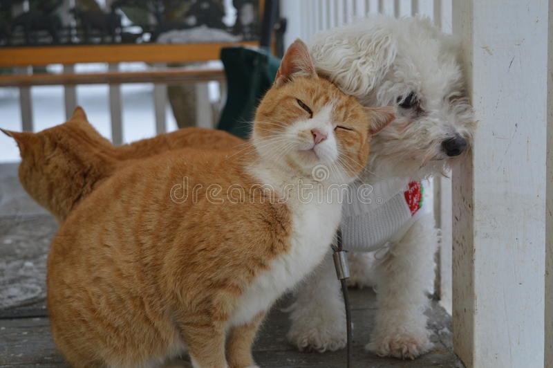 Cat snuggling a dog royalty free stock images