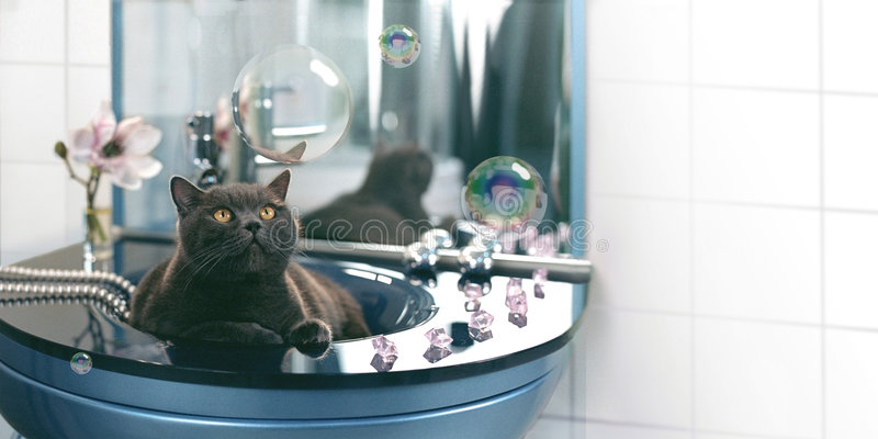 Download Cat and soap bubbles stock photo. Image of lynx, pail - 5297804