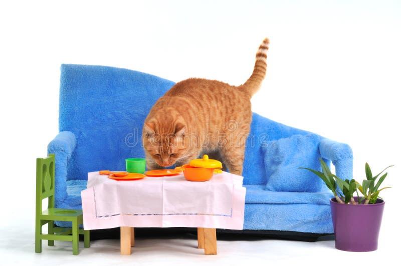 Cat on Sofa royalty free stock photography